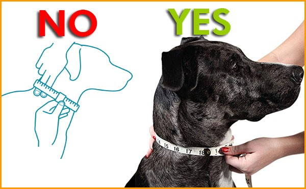how to measure for a dog collar