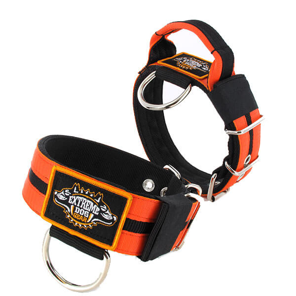 Double Orange custom dog collar 2 inch 5cm with handle extreme dog gear