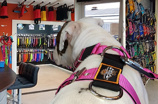 Extreme Dog Gear store in Amerongen Holland