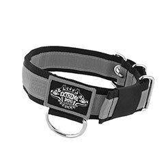 Stripe Dog Collars 1.6 inch extreme dog gear