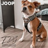 Joop the stafford in extreme dog gear olive harness