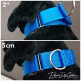 blue Martingale Dog Collar 2 inch