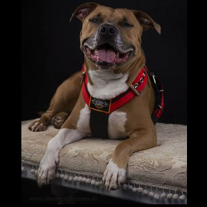 double stripe red dog harness