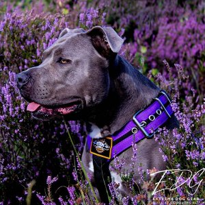 Custom Dog harness Double Purple