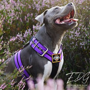 hand made custom Dog Sport harness Double Purple