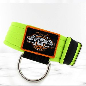 softshell fluor dog collar
