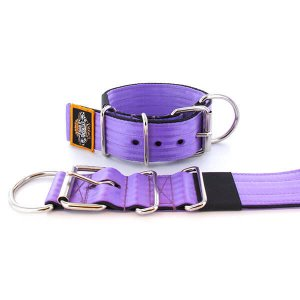 purple seat belt kennel dog collar