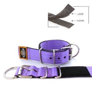 purple seat belt kennel keeper dog collar