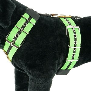 double stripe apple green 2 inch dog harness