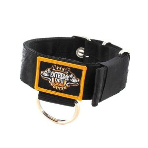 black 1.6 inch dog collar heavy duty