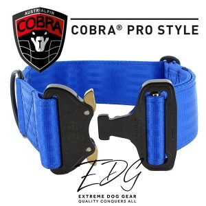 blue cobra buckle collar