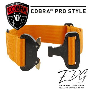 olive blue cobra buckle collar