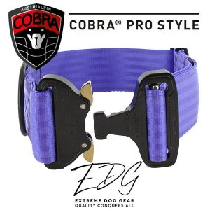 purple blue cobra buckle collar