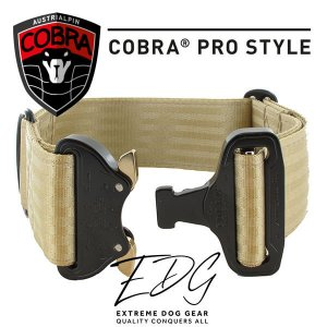 champagne cobra buckle collar