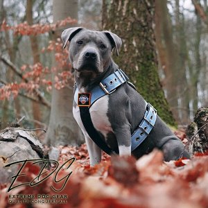 Pastel blue color dog harness by extreme dog gear
