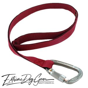 strong dog leash bordeaux