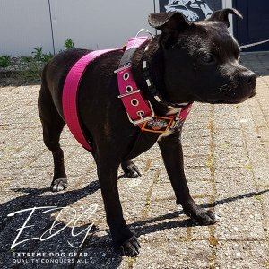 Dog Sport harness Fuchsia
