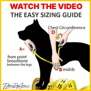 dog harness sizing guide extreme dog gear
