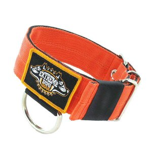 dog collar orange 2 inch heavy duty nylon