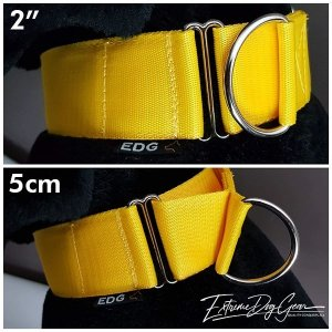 2 inch  Yellow Martingale Dog Collar