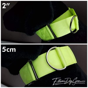2 inch Martingale Collar fluor