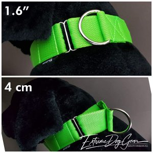 martingale collar medium size breed