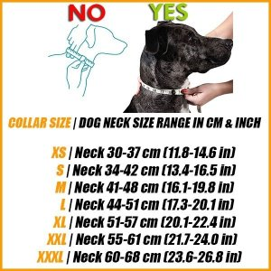 blue dog collar neck measurement sizing scheme