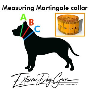 martingale dog collar measuring