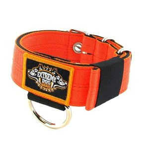 orange 1.6 inch dog collar heavy duty