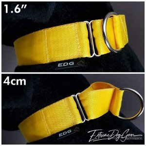 medium  Yellow Martingale Dog Collar